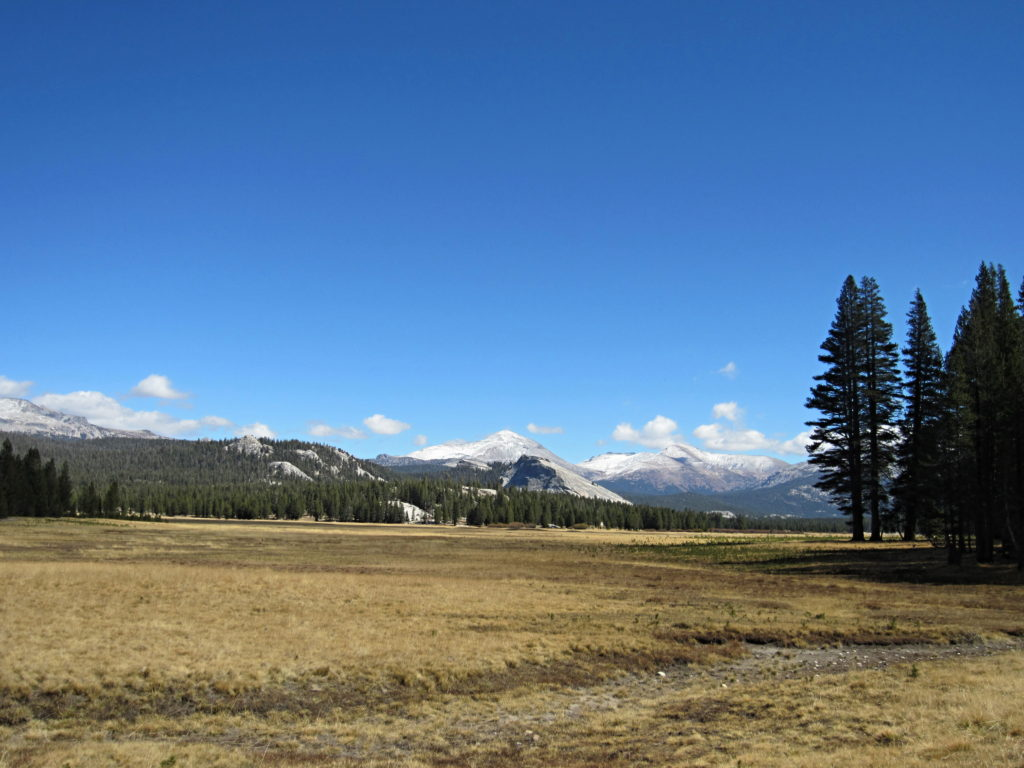 tulumne meadows